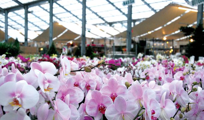 Tuincentrum Van Uytsel